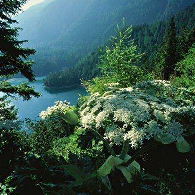 Austria, hemlock, flower, water
